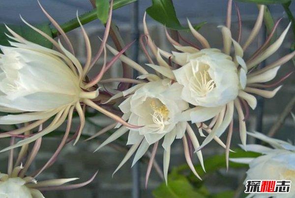 世界十种不同寻常的植物 第九能美容,第四能溶解任何生物