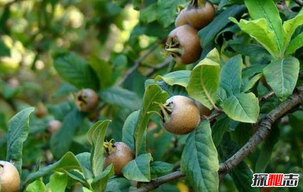 不常见的水果有哪些?10种不常见的奇葩水果(带图)