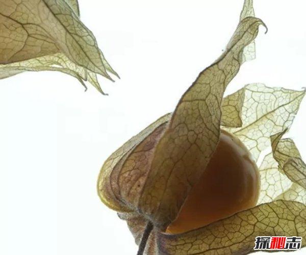 不常(chang)見(jian)的水果(guo)有哪(na)些?10種不常(chang)見(jian)的奇葩水果(guo)(帶圖)