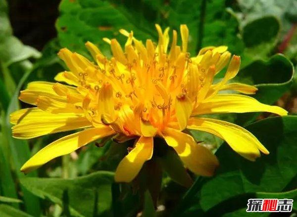 世界最有价值的十大药用植物 第四、第六皆能预防癌症