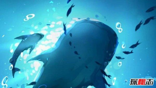 世界上最恐怖的鲸鱼图片