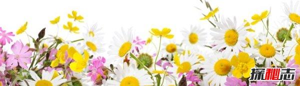 春天最容易得什么病?关于春天的10大基础小知识(必看)