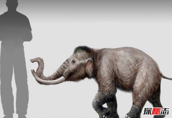 世界上什么动物灭绝了?已灭绝的十大罕见动物(幸好)