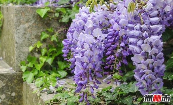 什麼植物(wu)不能踫?10大漂亮而不能隨(sui)意踫的植物(wu)(小心為好)