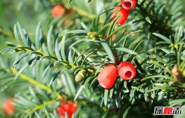 什么植物不能碰?10大漂亮而不能随意碰的植物(小心为好)