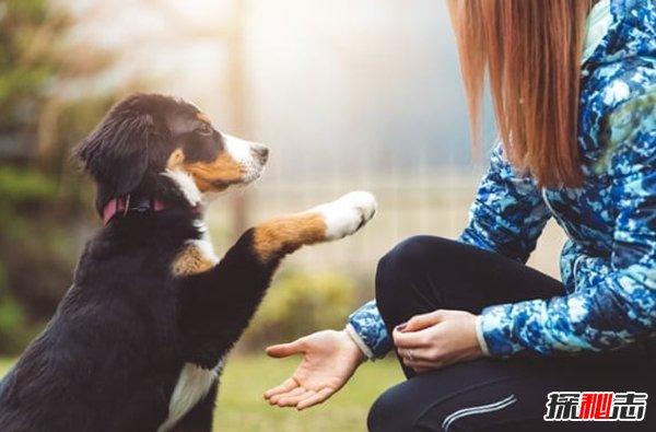 为什么支持动物实验?对人类有帮助的十大动物(真相揭秘)