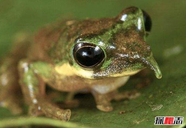 近些年发现的十大物种 第六终生交配,第二令人害怕至极
