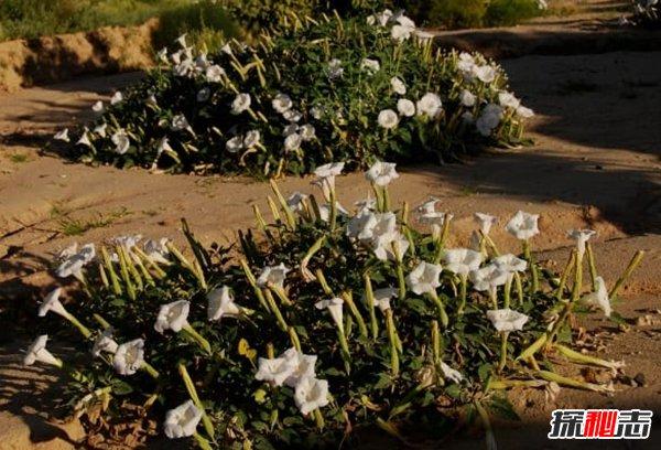 哪些植物一碰人就会死?生活中致人死亡的十大植物