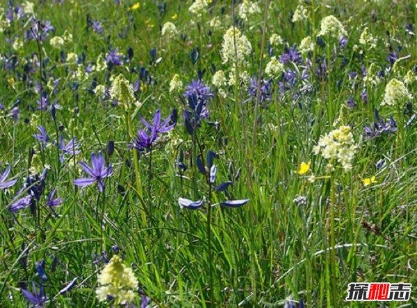什么植物可以让人致死?盘点可以毒死人的10种植物