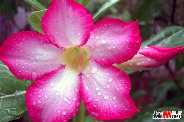 外表美丽却危险的十大植物 个个杀人于无形(恐惧万分)