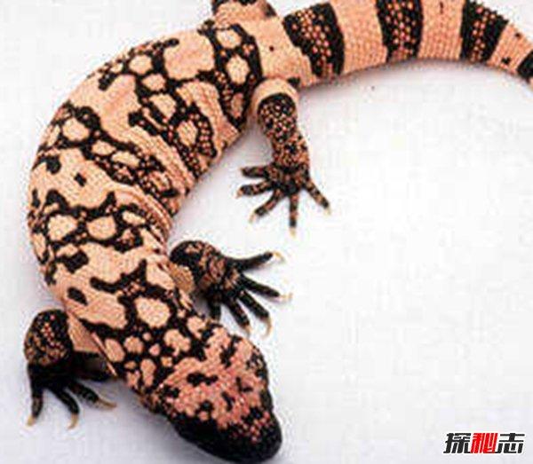不起眼的10大最毒动物 第五腐蚀猎物,第一杀人高手(要远离)