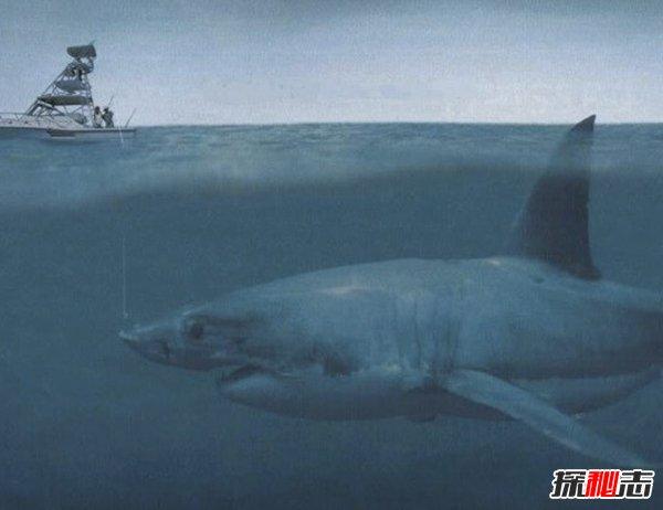 已灭绝的十大海洋巨怪 第二牙齿多达百颗(庆幸已消失)