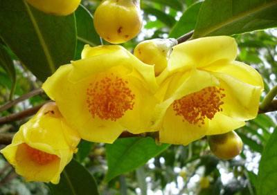 世界上最稀有的10种植物:尸香魔芋会让人自杀,第三种最孤独