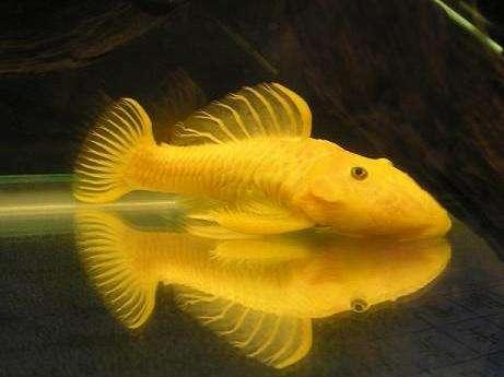 世界上最稀有的六种鱼:空棘鱼轰动世界(起源3亿年前)
