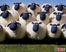 羊群效应的真实案例 羊群效应产生的原因
