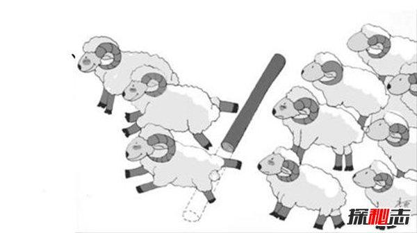 羊群效應的真實案例 羊群效應產生的原因