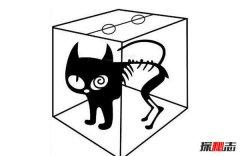 薛定谔的猫比喻什么?薛定谔的猫通俗解释