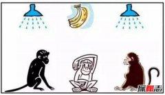 五只猴子道德起源启示 湿猴定律说明什么