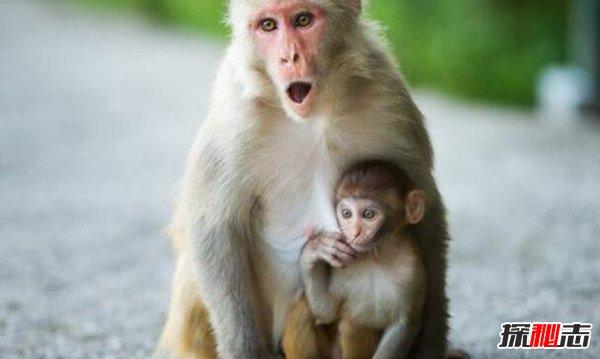 五只猴子道德起源啟示 濕猴定律說明什么