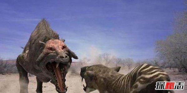 完齒豬:強大的可怕生物 擁有遠超鱷魚的咬合力