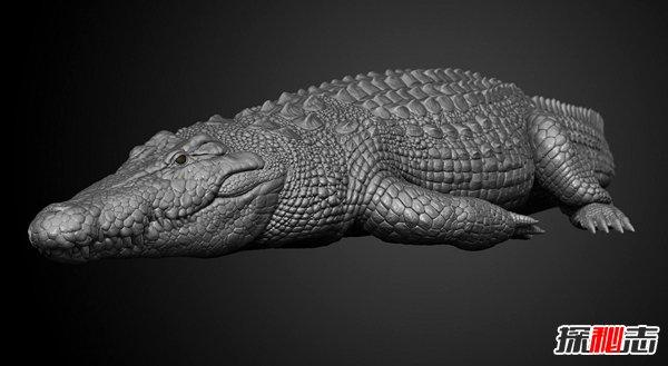 世界十大最大鱷魚 咸水鱷體壯兇殘會攻擊人類
