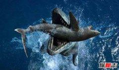 中国特有古老珍惜鱼类 龙鲨活化石般存在