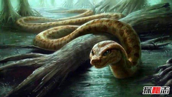 世界上最大巨型蝙蝠的毒蛇最长可达三米体重可达三十五斤