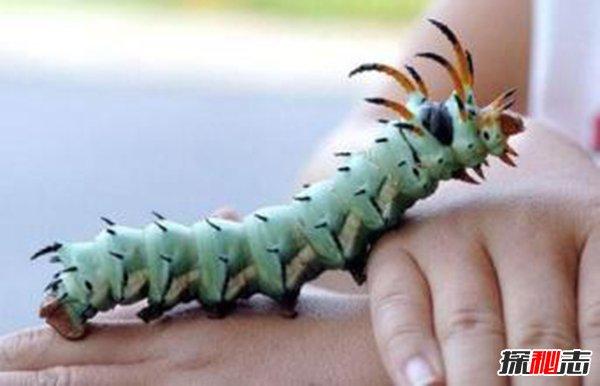 世界十大恐怖變異動物 毛蟲長角造型詭異基因變異所致