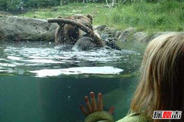 世界最神秘女兽孩:熊女,被熊养14年(会熊叫吃生肉)
