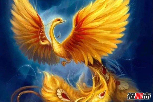 九种凤凰,凤凰究竟生了哪九种神鸟?(大鹏展翅2丈宽)