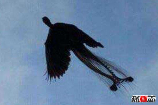 世界上最后一只凤凰