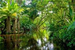 亚马逊森林在哪个地方 位于亚马逊盆地(横跨九国家)