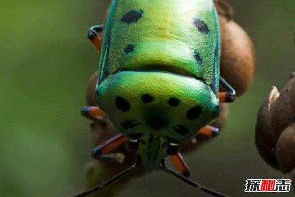 臭壳虫_世界上最有趣的十大人面动物,这些神奇的动物令人大开眼界 ...