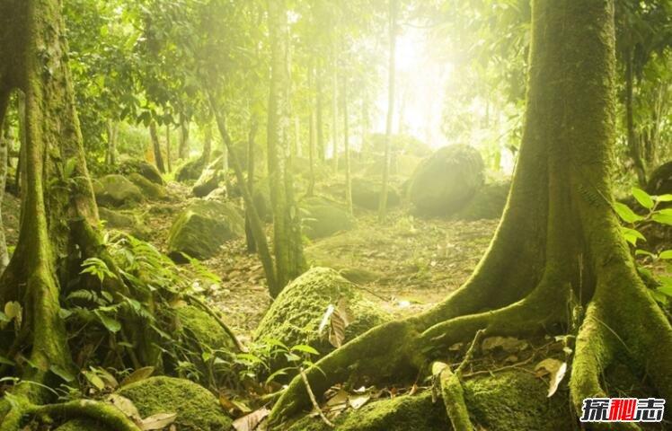 森林将覆盖大地