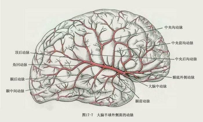 人类的大脑其实很可怕,不会疼痛还会自相残杀