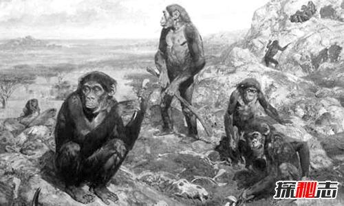 人类进化历程