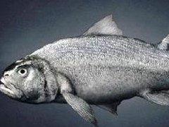 人类是鱼进化的吗?从鱼到人的进化过程图片揭秘