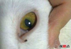 世界上竖瞳孔的人 竖瞳人类真的有吗(竖瞳、横瞳区别)