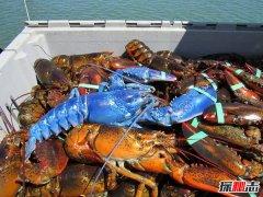 世界上罕见的神秘物种 螃蟹酷似草莓长满白点