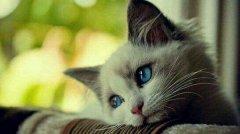爱情里的弃猫效应 对一个女生弃猫效应