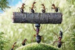 蚂蚁效应是什么?蚂蚁效应对人类的启发:团结就是力量