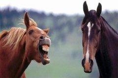 """千万别做职场中的""""懒马"""",如何避免懒马效应?"""