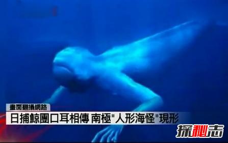 """南极""""人形海怪""""之谜,日捕鲸船到底发现了什么"""