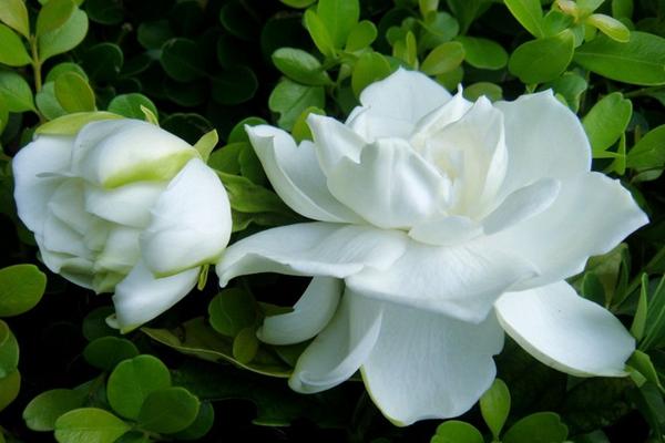 中国十大最香的花:第一非桂花莫属 第二3500米内都能闻