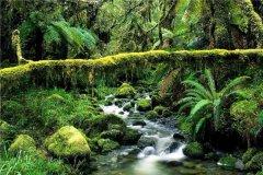 世界三大森林分别是什么 这些森林在世界上地位如何