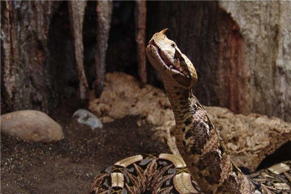 世界rpg九头蛇徽章图片