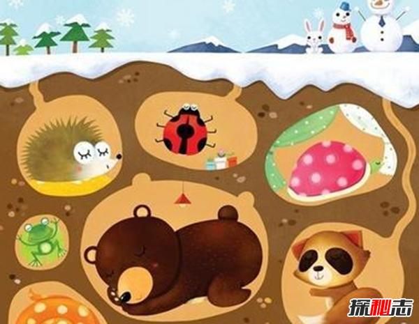 动物冬眠之谜,诱发物决定动物是否冬眠
