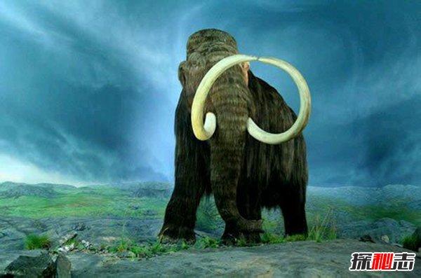 比恐龙更可怕13种动物,来自远古的怪异巨兽