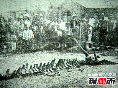 昆仑山冰封的真龙,日本竟收藏了中国真龙标本