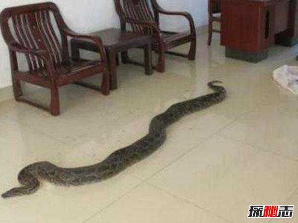 蛇进家门不能打的真相竟是这样,很可能是给你送财来了